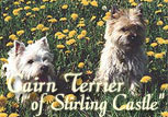 Cairn Terrier of Stirling Castle